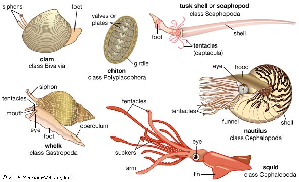 Cephalopod Research | Kyle Taitt
